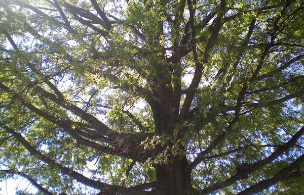 Learning-tree