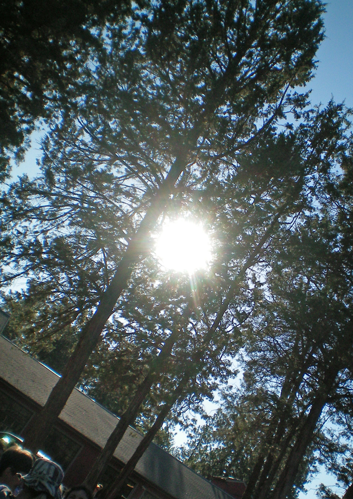 Sun-and-pines