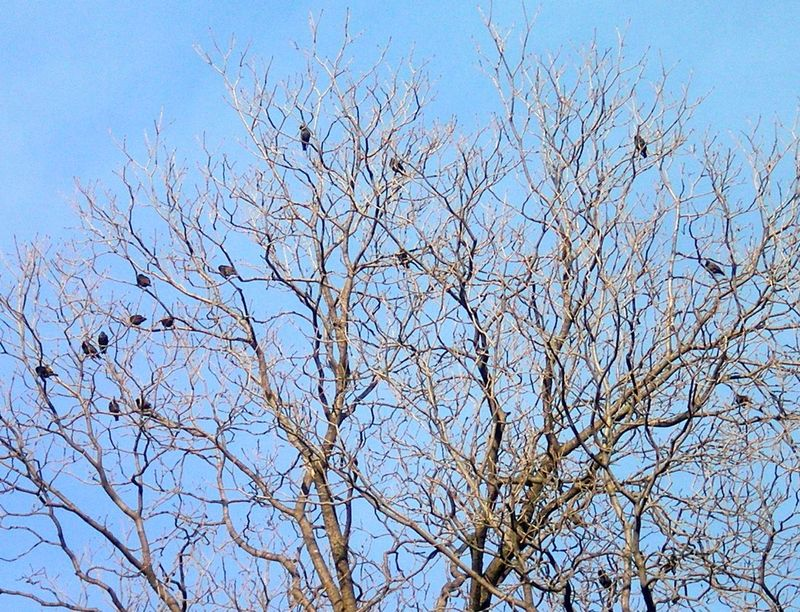 Birds n tree 2