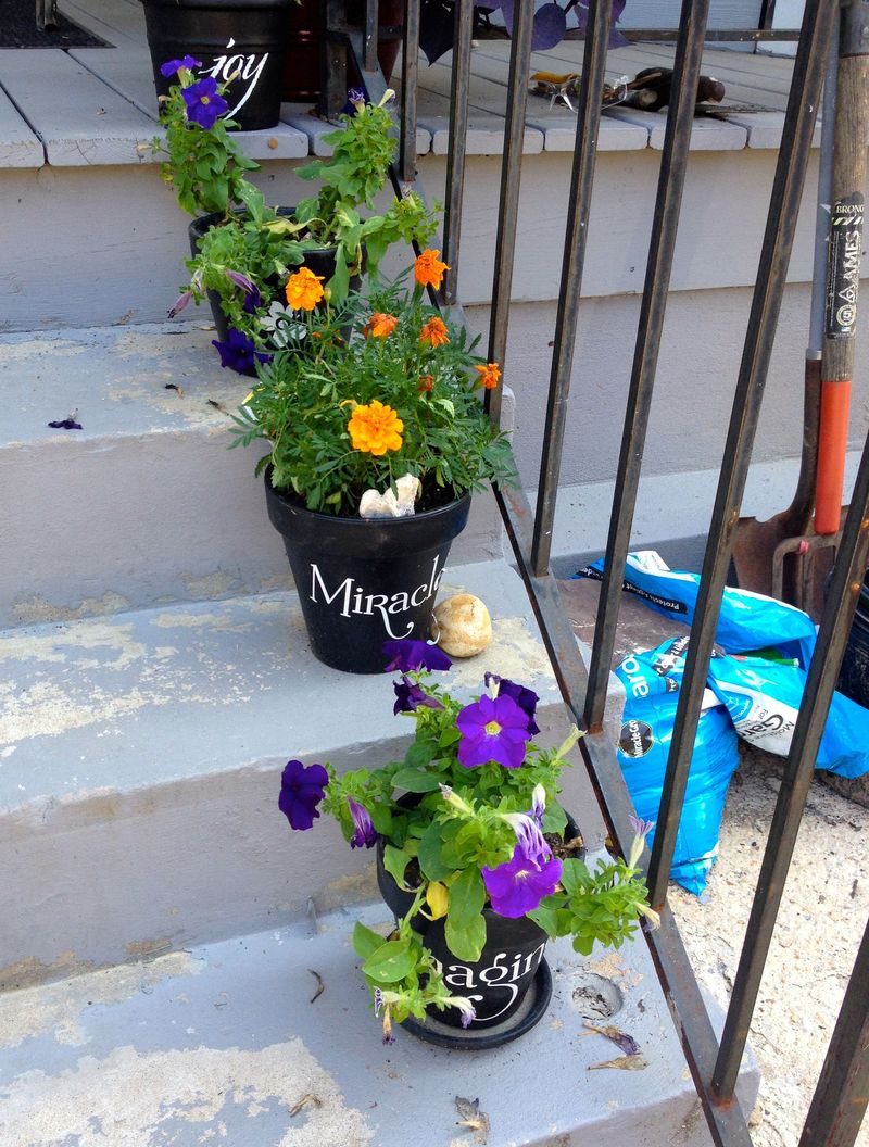 Pansies in pots