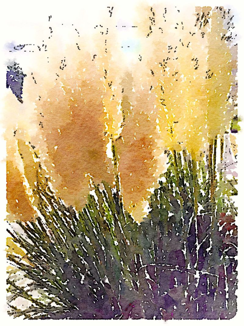 Painted in Waterlogue ornamental grass