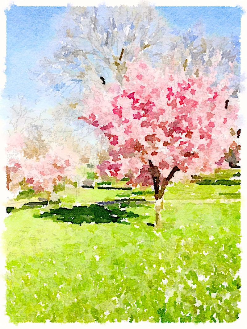 Painted in Waterlogue-pretty in pink