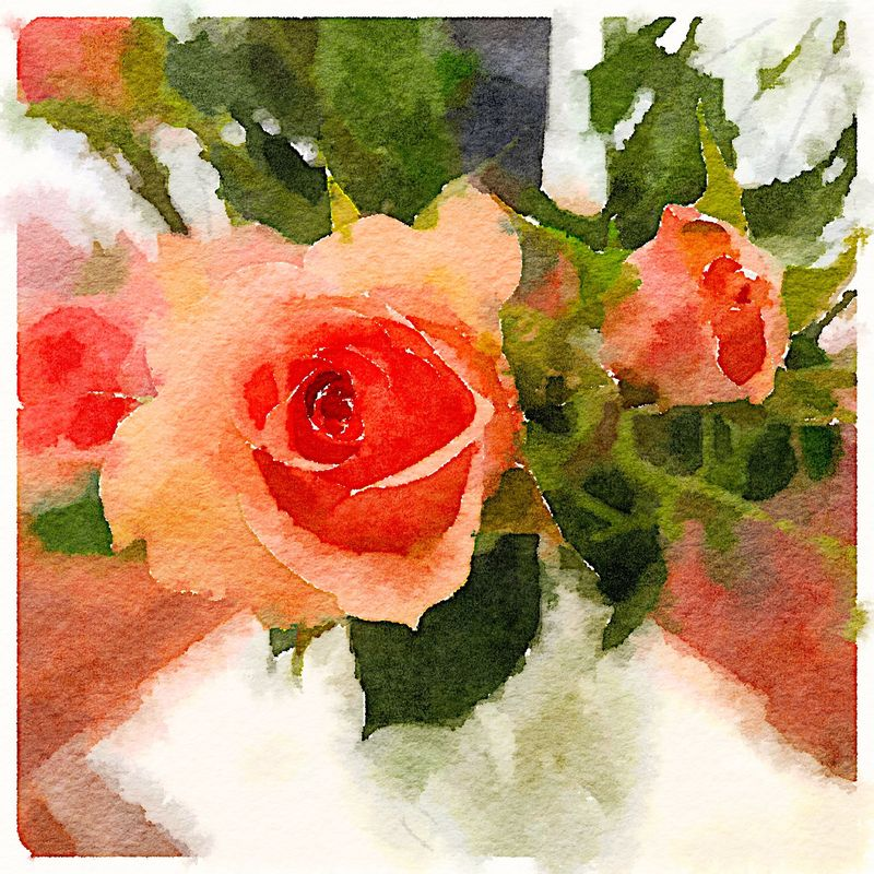 Painted in Waterlogue-roses
