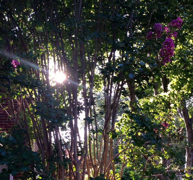 WiTL 2015 -05 sunlight