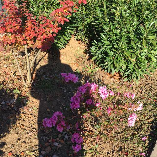Azalea+shadow