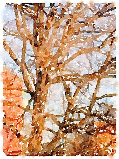 Painted in Waterlogue-thistree bare