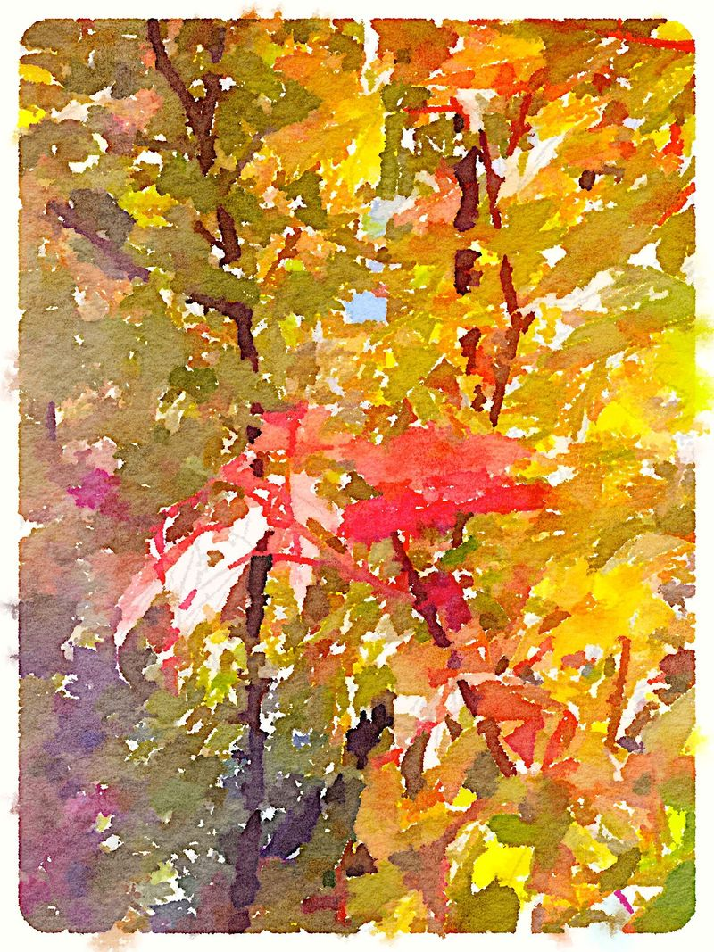 Painted in Waterlogue 10.1