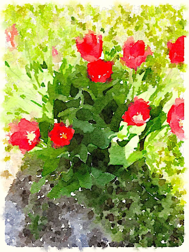 Painted in Waterlogue-Shadow