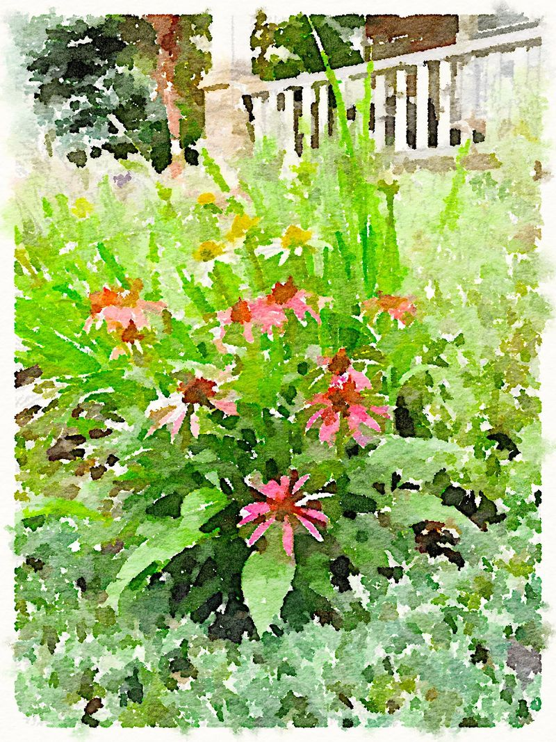 Painted in Waterlogue-Cone Flowers
