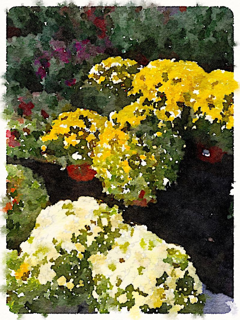 Painted in Waterlogue - Mums