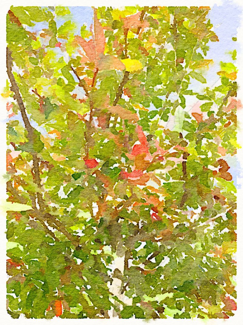 Painted in Waterlogue-Fall Colors