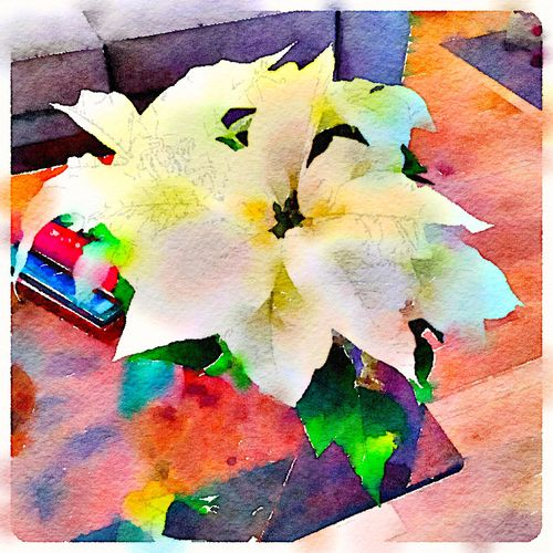Painted in Waterlogue - poinsettia 2015