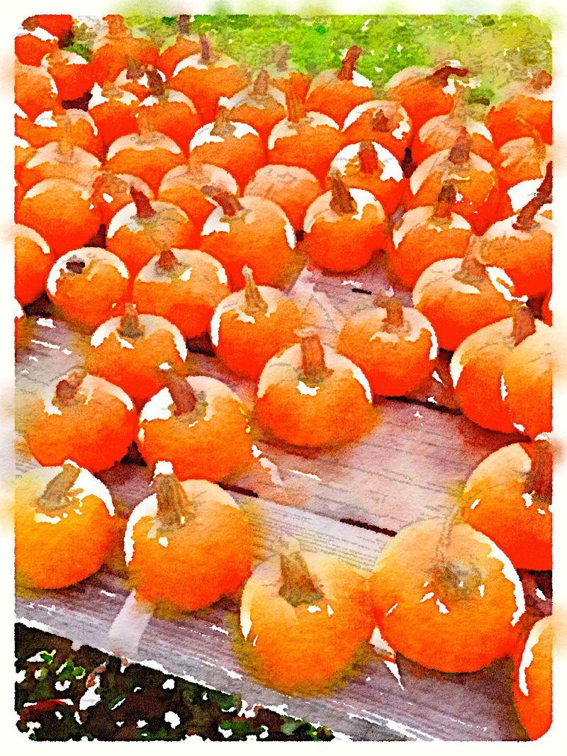 Painted in Waterlogue-Pumpkins