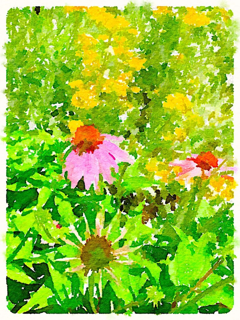 Painted in Waterlogue - cone flower