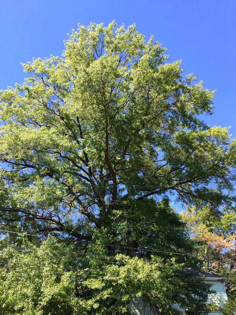 WiTL 2015-Sa:Su - this tree